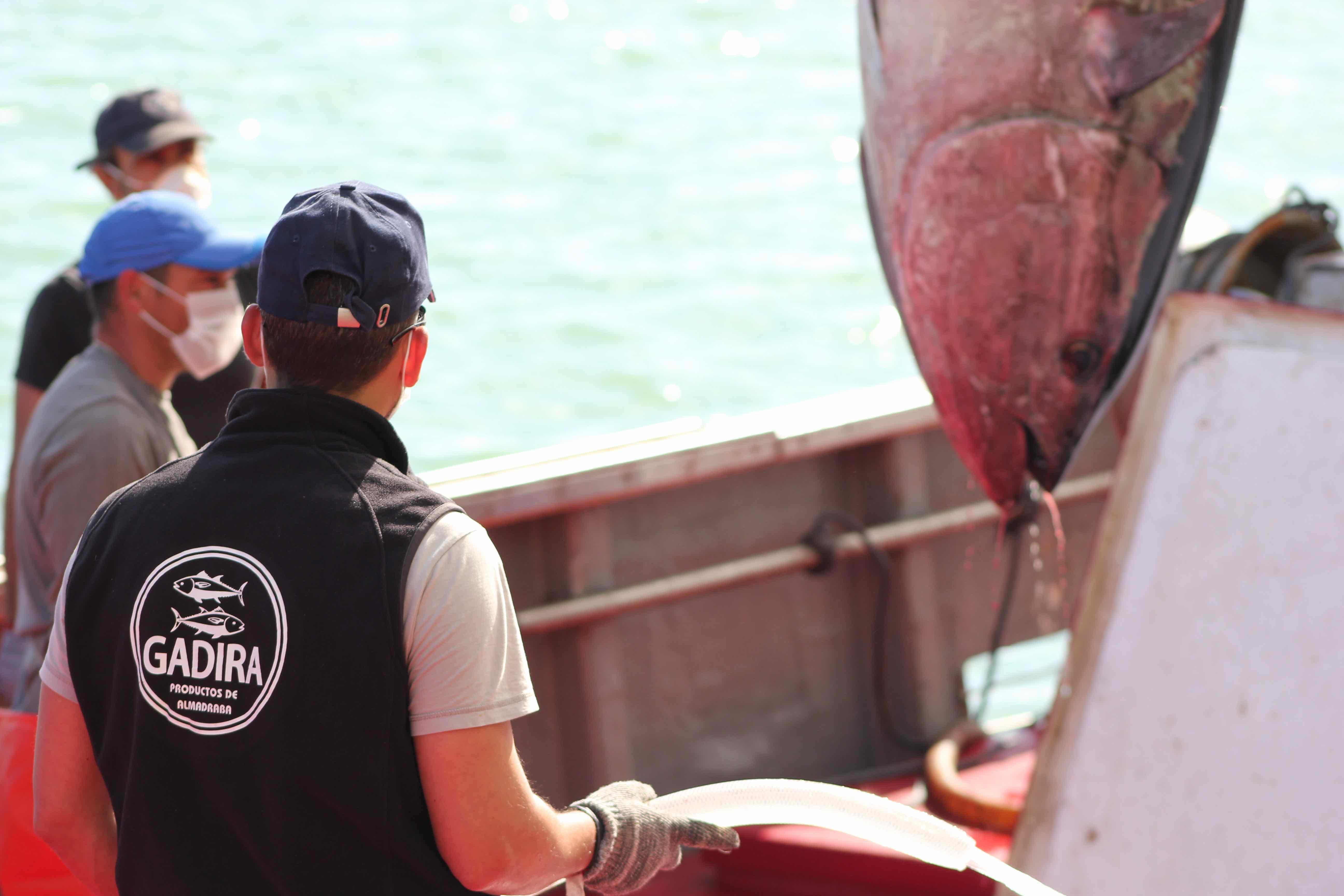 Una imagen de la campaña de pesca 2020 de la almadraba de Conil